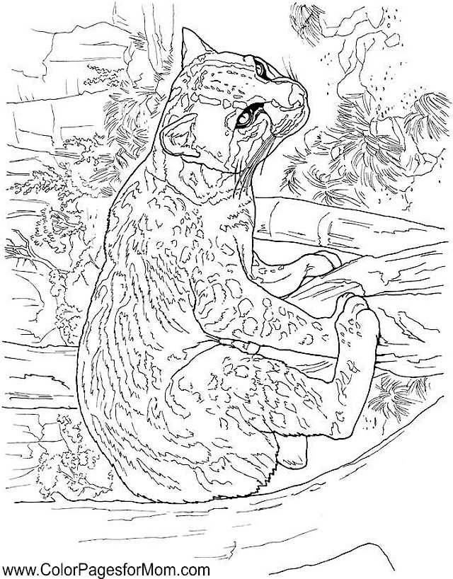 Advanced Coloring Pages Of Animals : Advanced coloring pages animals