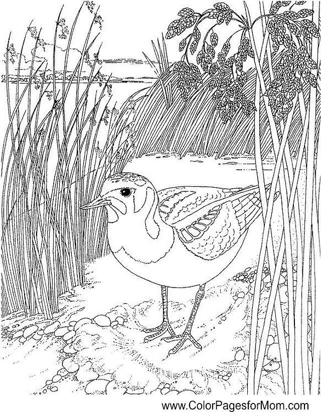 advanced coloring pages of animals - animals 155 advanced coloring pages