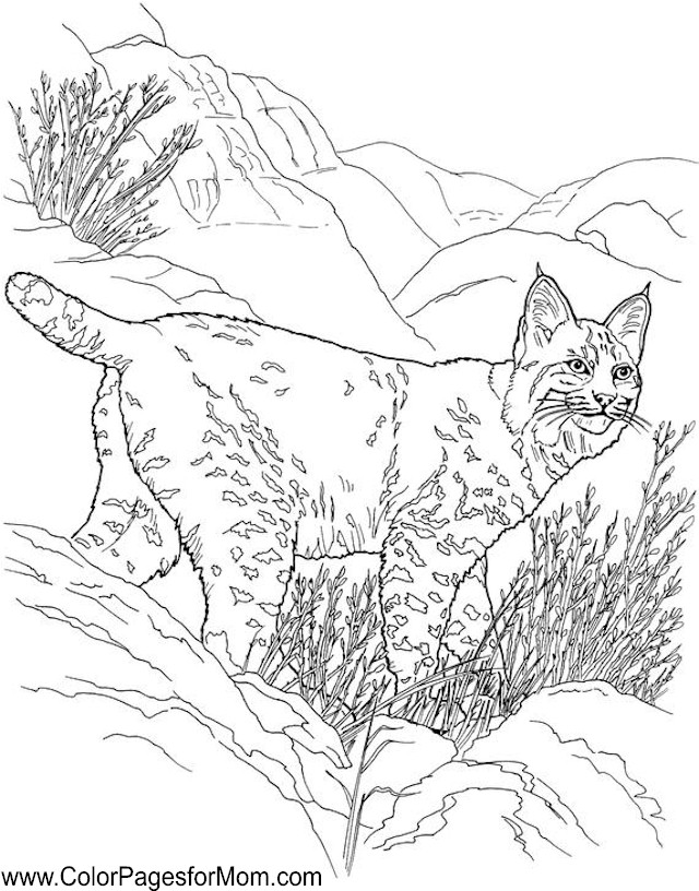 Advanced Coloring Pages Of Animals : Free coloring pages of mom s birthday