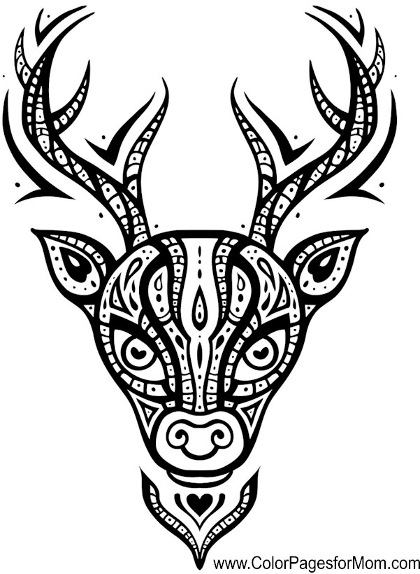 Animals 90 Advanced Coloring Pages