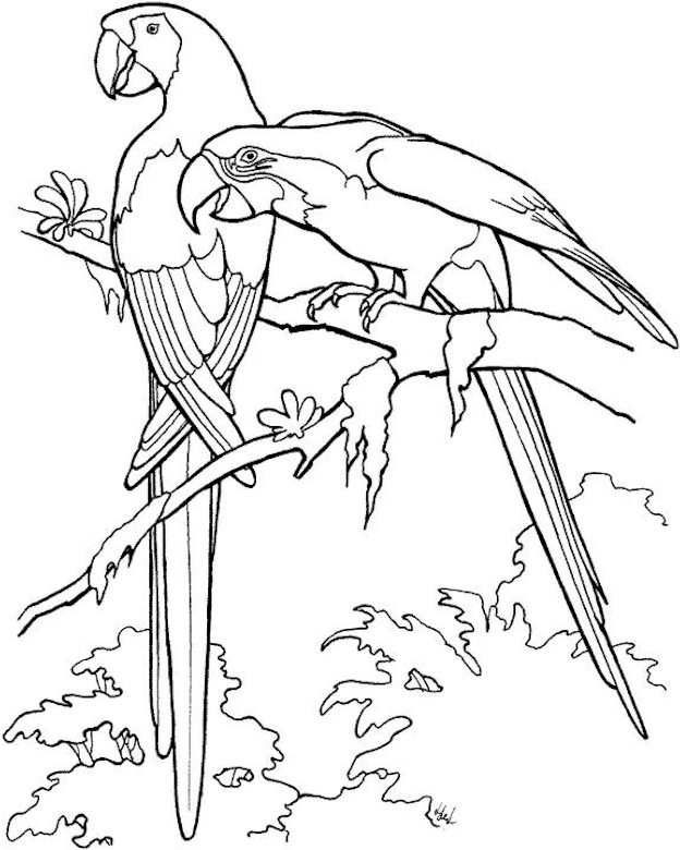 Bird Coloring Page Coloring Pages For Adults Bird