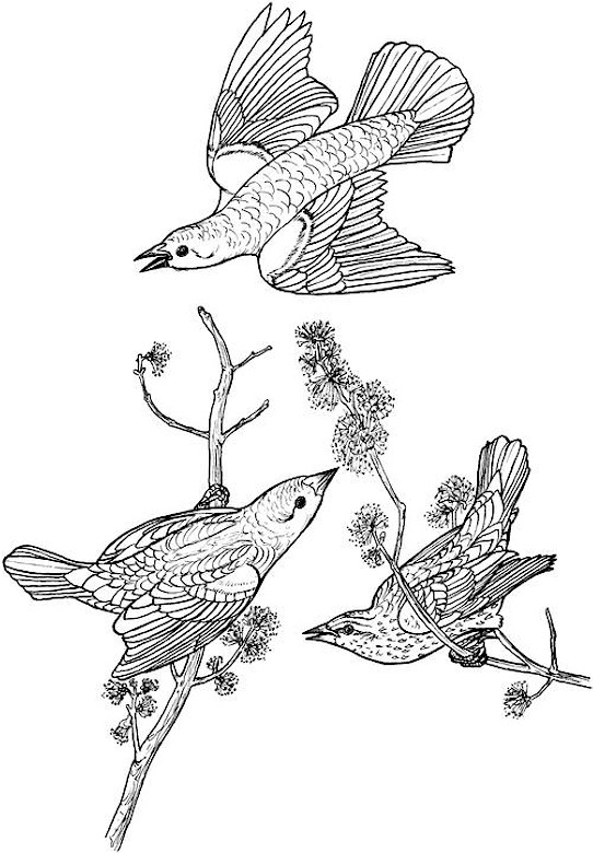 difficult bird coloring pages - photo #31