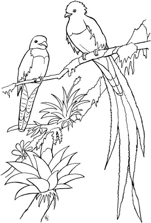 Printable Coloring Pages For Adults Birds : We Create Best Plan: Free landscaping designs vans coupons