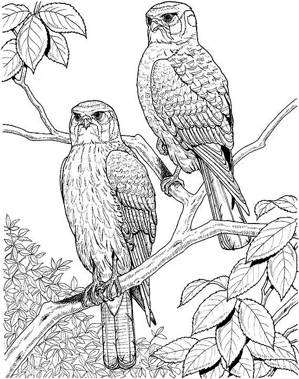 difficult bird coloring pages - photo #10