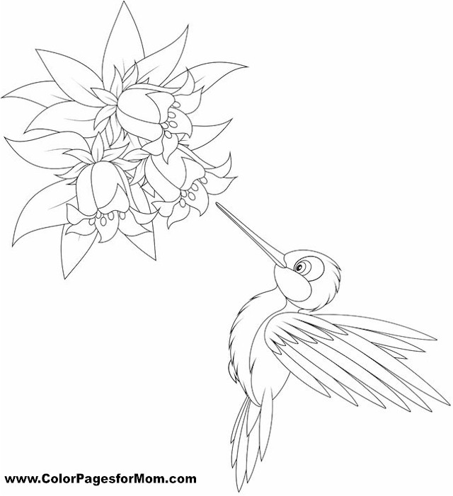 Bird Coloring Pages For Adults Page 26