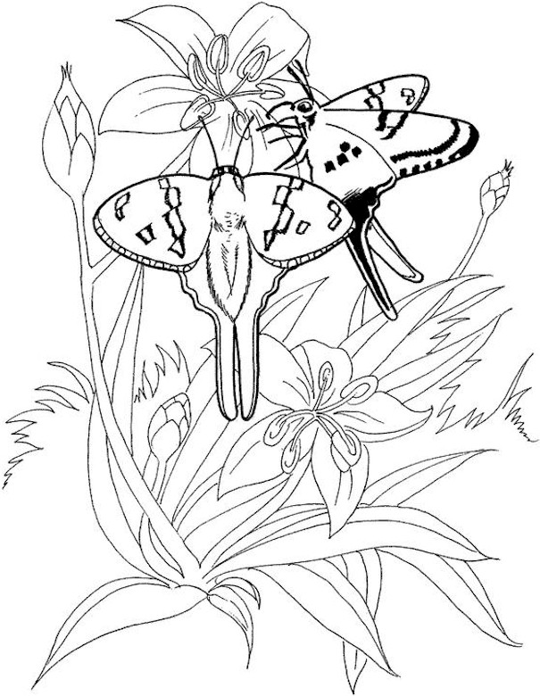 Coloring pages printable coupons work at home free coloring pages