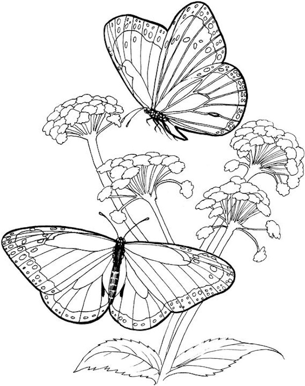free coloring pages with butterfly - photo#29