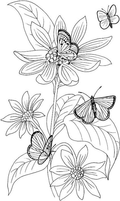 Free Detailed Butterfly Coloring Pages