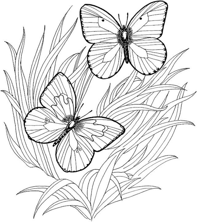 butterfly coloring pages for adults coloring pages
