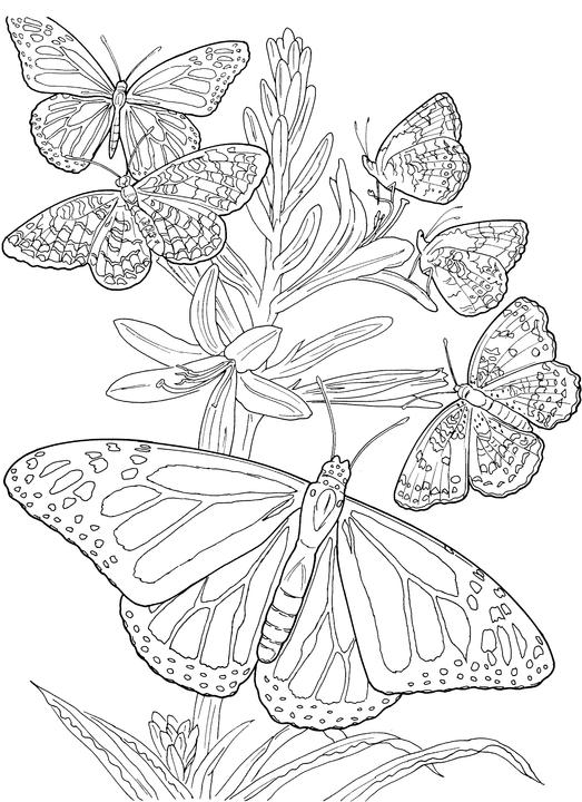hard butterfly coloring pages - photo#31