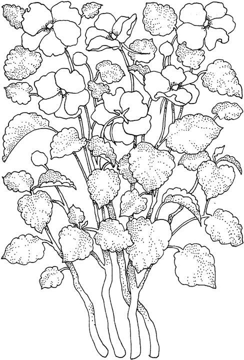 flowers 1 coloring page click to print image only without ads