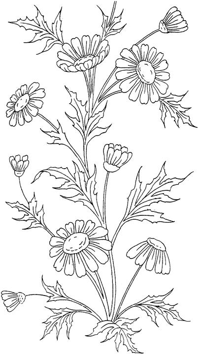 Sympathy flowers for coloring adult coloring pages for Flower coloring pages for adults