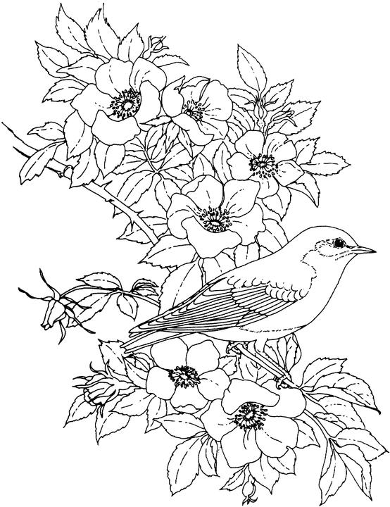 flower drawing coloring pages - photo#16