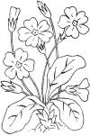 free printable adult coloring pages flower coloring pages - Small Flower Coloring Pages