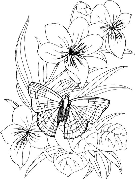 Free coloring pages of butterfly and flower pictures