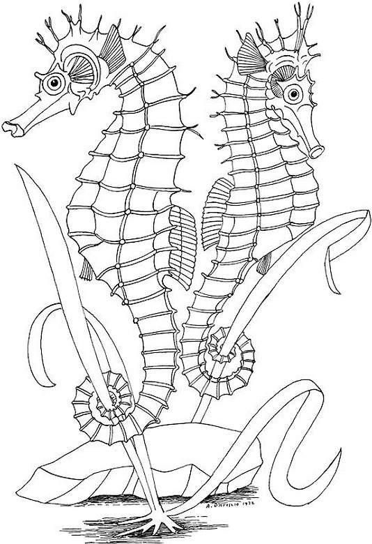 Colouring Template For Adults : Printable Adult Coloring Pages Ocean Coloring Pages