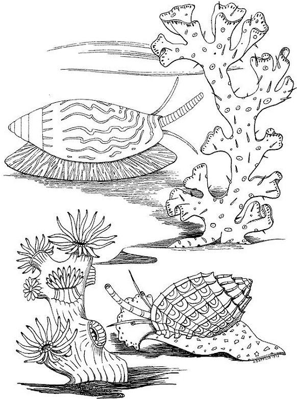 ocean seascape coloring pages - photo #6
