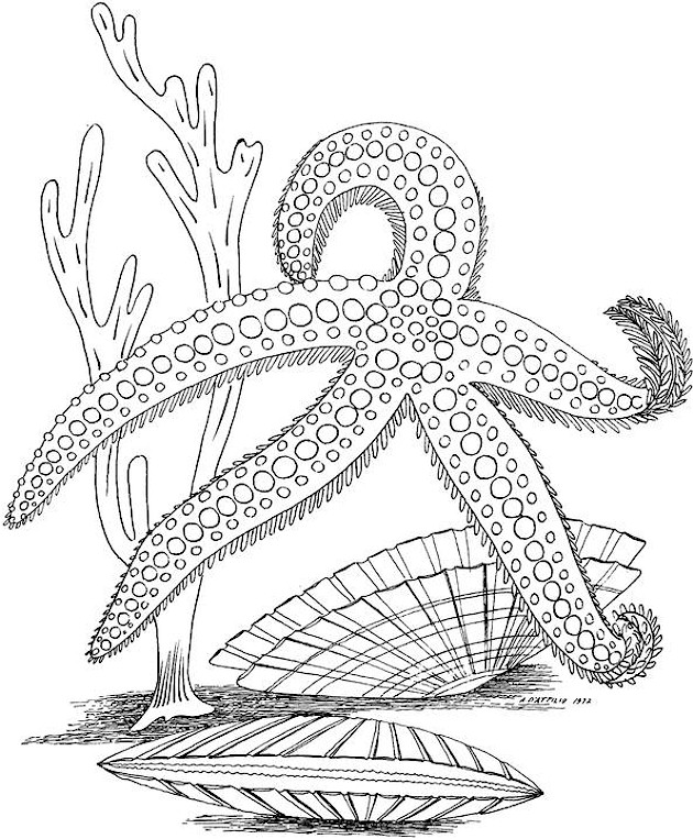 Shells Coloring Page