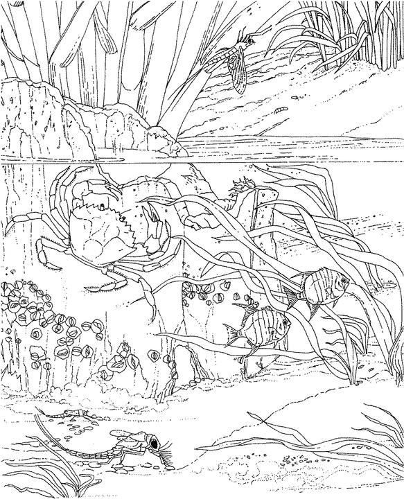 ocean scenes coloring pages - photo#34
