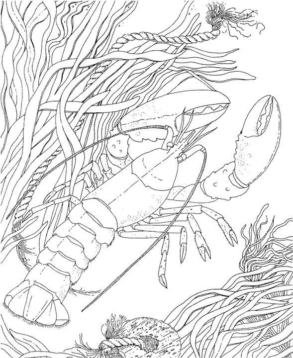 Adult Coloring: Oceans on Pinterest | Ocean Coloring Pages ...