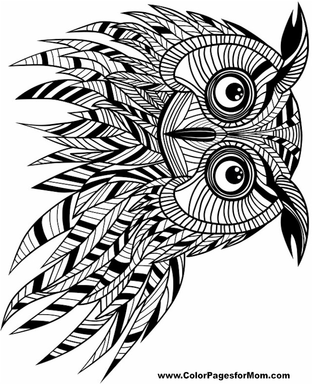 Free Printable Adult Coloring Pages  Owl Coloring Pages