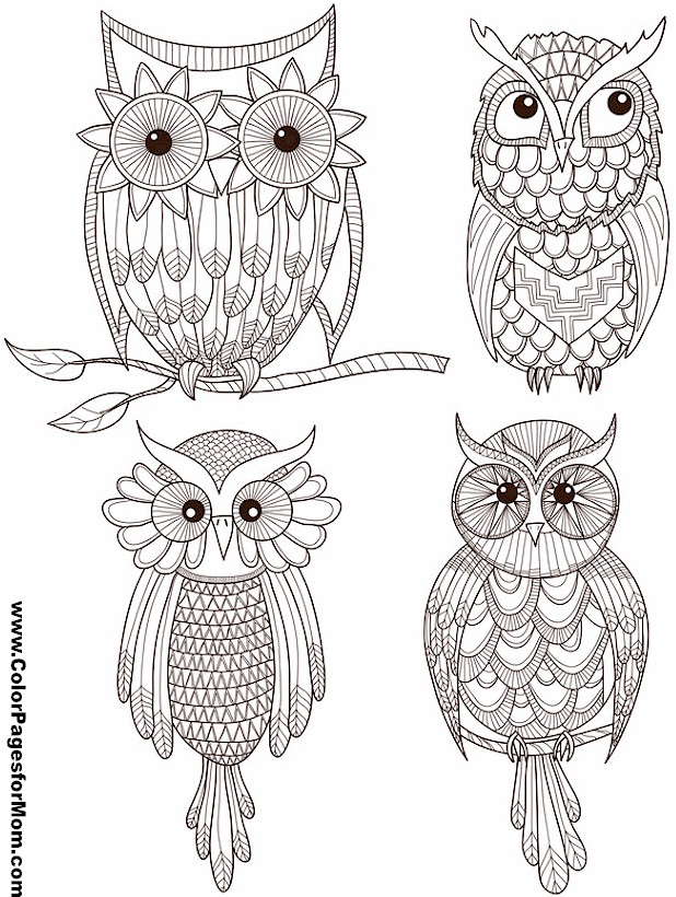 free owl coloring pages for adults - owl coloring page 27