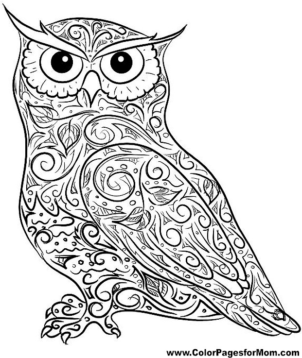 Adult owls coloring pages