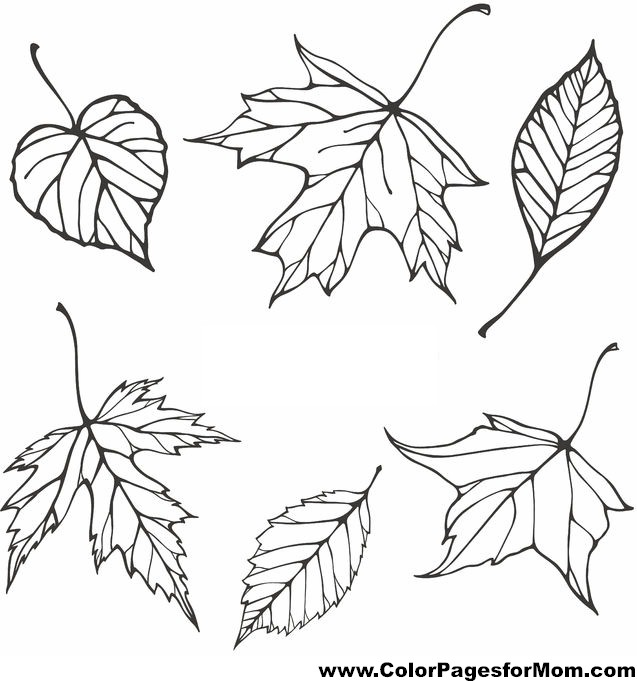 leaf coloring pages for adults - photo#20