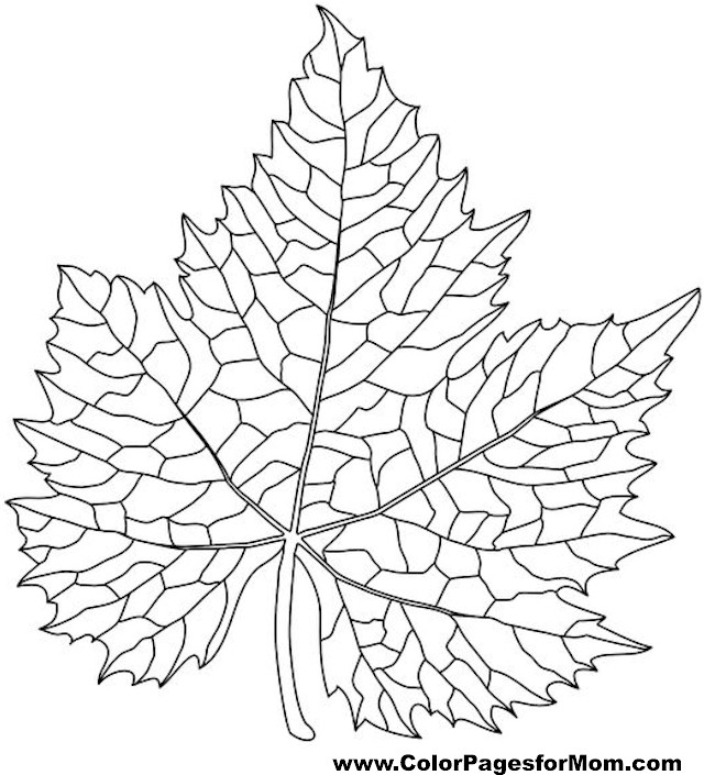 leaf coloring pages for adults - photo#11