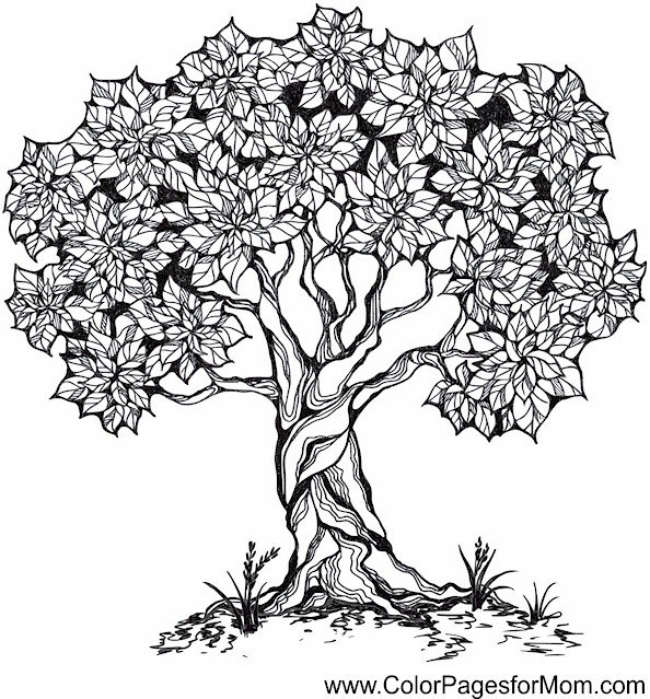Tree Coloring Page 26 Tree Coloring Page For Adults