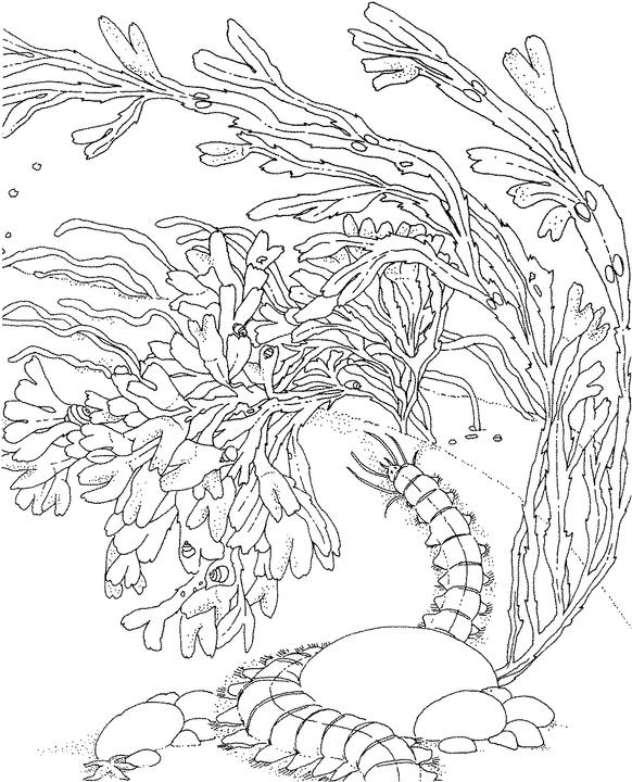 Seascape - Ocean Coloring Page